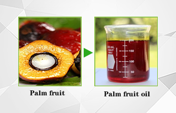 palm fruit and palm oil