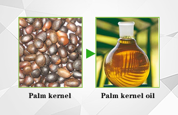 palm kernel and palm kernel oil