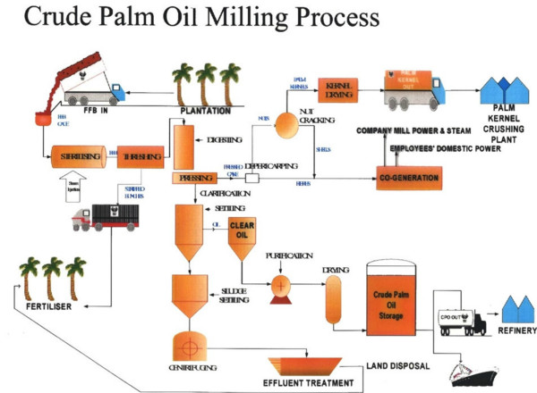 Palm oil processing flow chart
