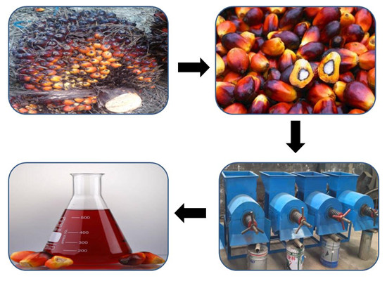Palm oil press production machine