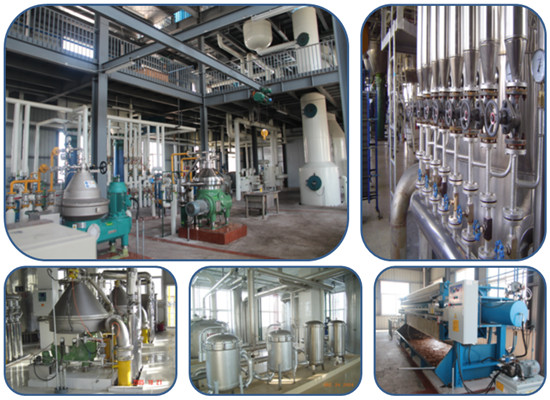 Palm kernel oil refining process machinery