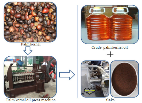 Newest palm kernel oil press machine will delivery to Ivory Coast