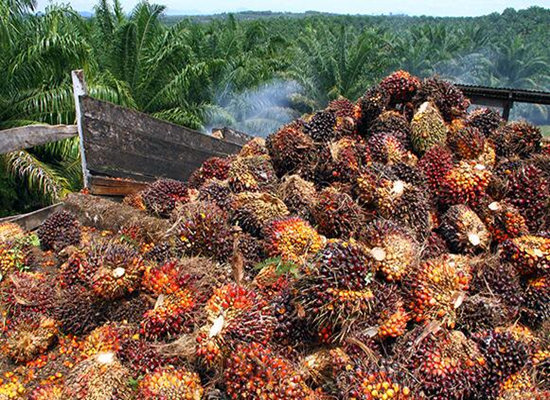 What is palm oil? What's wrong with palm oil?