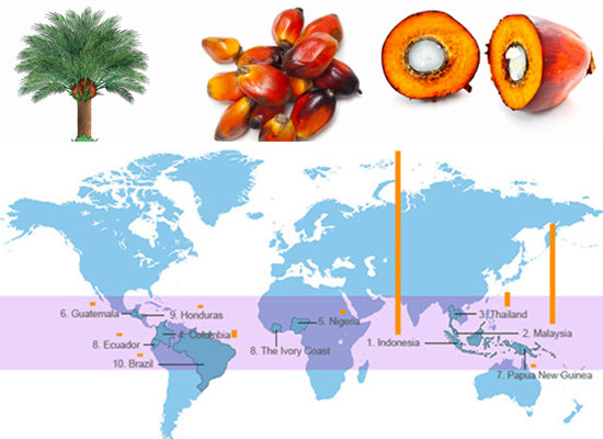 Top palm oil producing countries in the world (Palm oil production in tonnes)