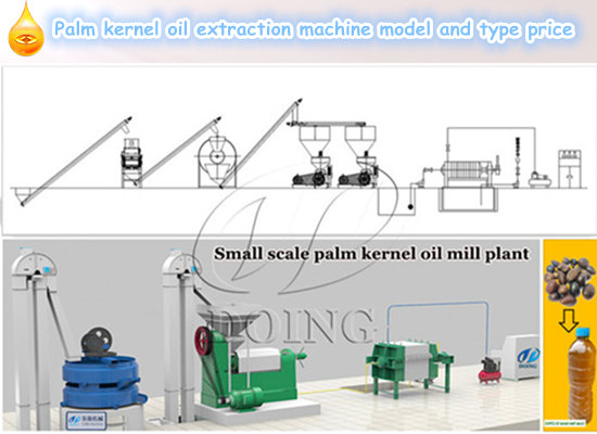 Palm kernel oil extraction machine model and type price