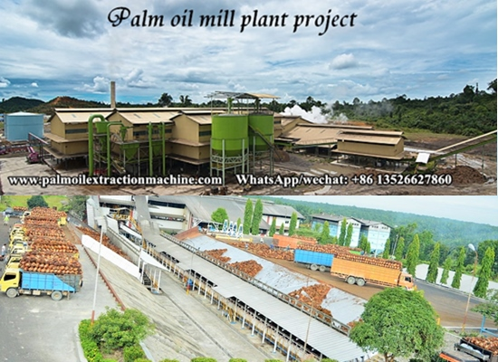How to set up a palm oil mill and how long will it take to build a palm oil mill plant project?
