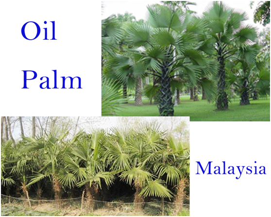 determinants of the price of palm oil in malaysia Correction model, demand influencing factors and price integration in each  market of  product, prices of france palm oil import from indonesia, malaysia,  and.