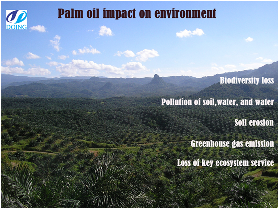Palm oil impact on environment