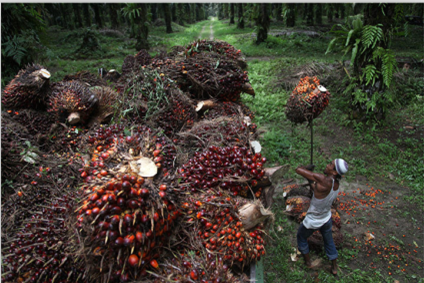 palm oil  proecess