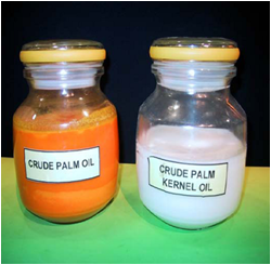 crude papm oil and crude palm kernel oil