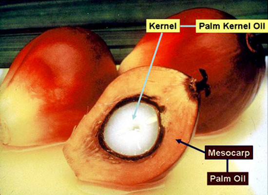 The source of palm oil and palm kernel oil