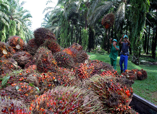 Higher Malaysian Palm Oil Export to India
