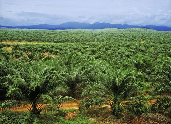 One of The World's Largest Palm Oil Exporter