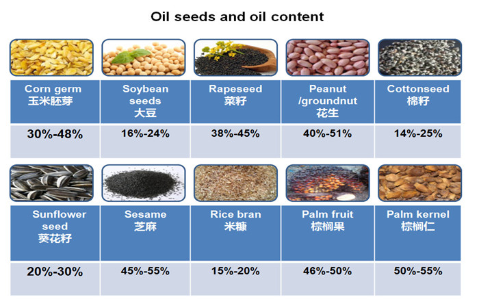 oil seeds oil content