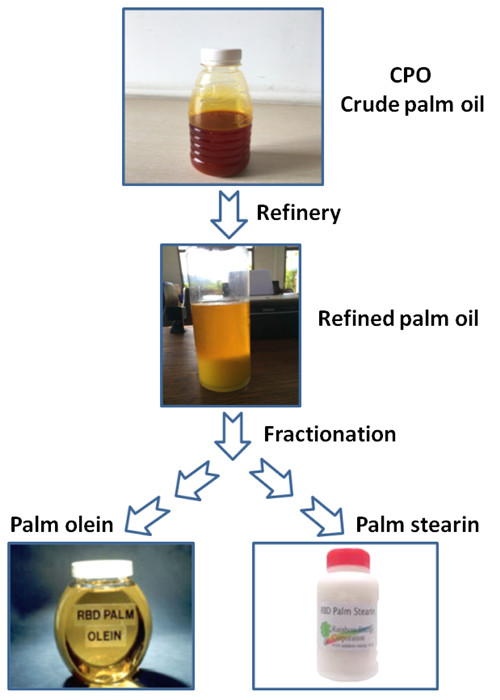 crude palm oil and refined palm oil