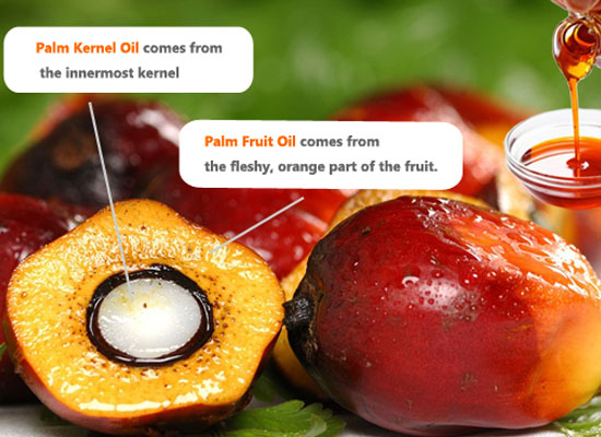 palm oil and palm kernel oil