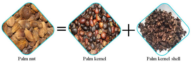 palm kernel machine