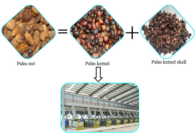 Small Palm Kernel Oil Expeller Machine Edible Oil