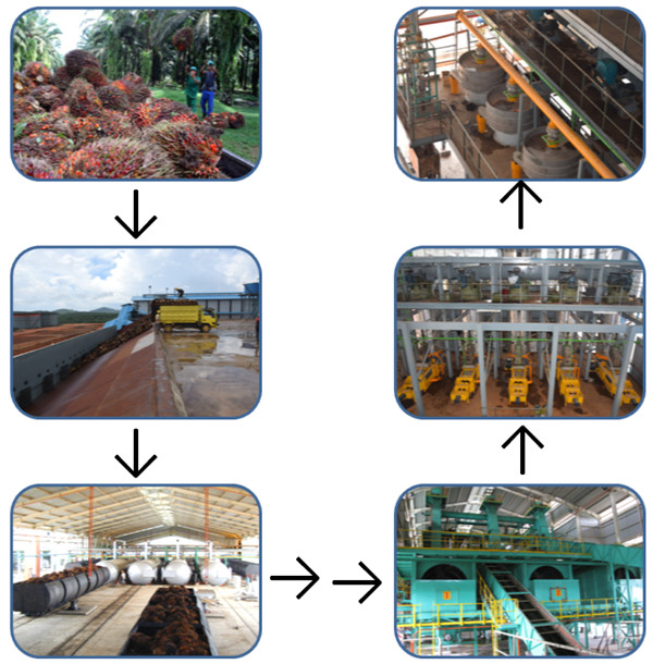 palm oil manufacturing process machinery