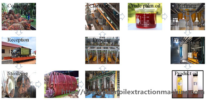 palm oil production machine