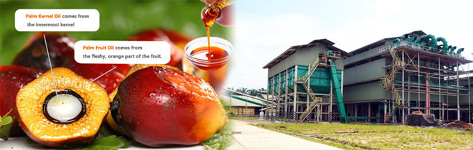 red palm oil extraction process