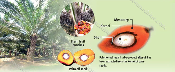 palm kernel oil processing business