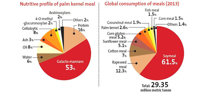palm kernel oil business overview