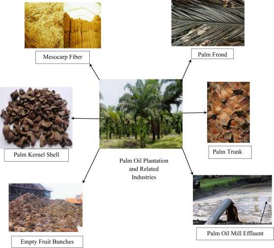 palm oil mill effluents