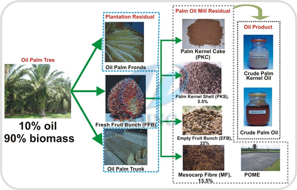 oil palm tree and byproducts
