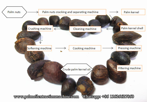 palm kernel oil extarction process