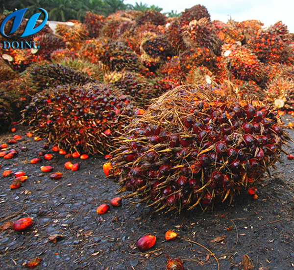 palm oil production in Ghana
