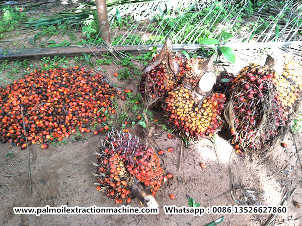 Nigeria palm oil industry