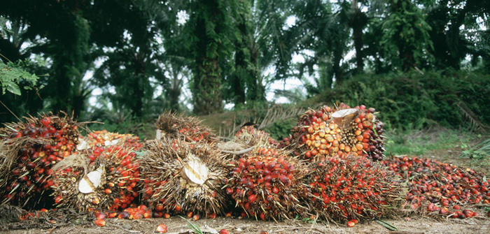 palm oil production industry